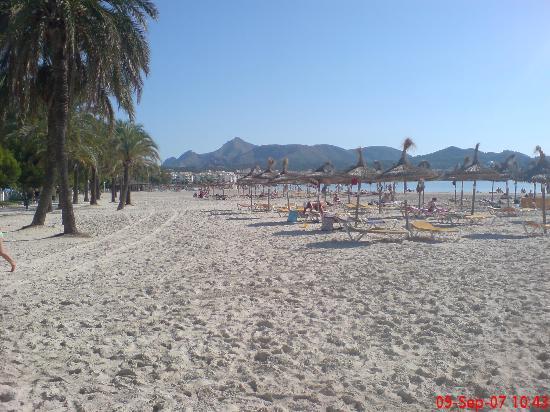 Apartamentos Ferrer Tamarindos: Lovely beach