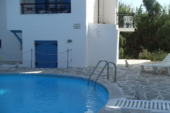 Sunny Beach Studios: The pool area complete with three white kittens.