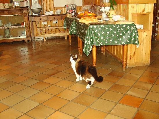 Auberge du Manoir: cat