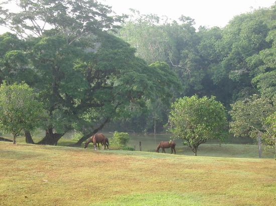 Belize Jungle Dome: Back yard at the Jungle Dome