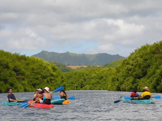 Best Tour Company In Kauai