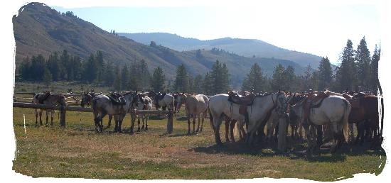 Nine Quarter Circle Ranch: Horses