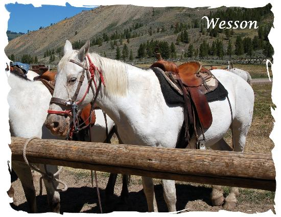 Nine Quarter Circle Ranch: Wesson