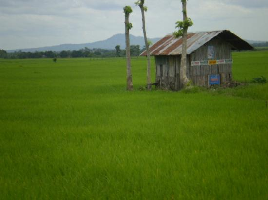 Минданао, Филиппины: Ricefield in the plains of Mindanao