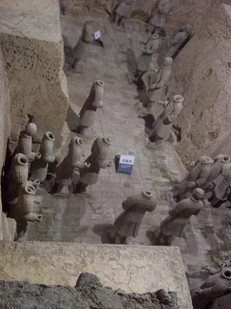 what did the terra cotta warriors Famous as the world's eighth wonder, the terracotta warriors and horses museum is the largest underground military museum in the world, with exhibits of.