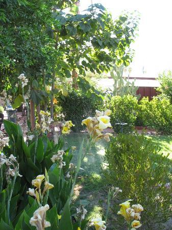 Tortuga del Sol: Garden of Tortuga