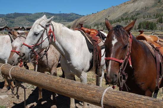 Nine Quarter Circle Ranch: Ranch Horses