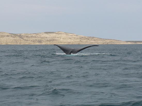 Casa en la Bahia : Whale Tour 2