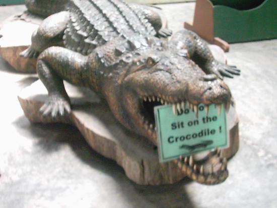 Crocolandia: yikes!! good thing its dead!!