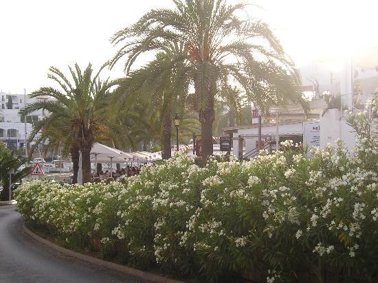 Inturotel Sa Marina: Walking into Marina