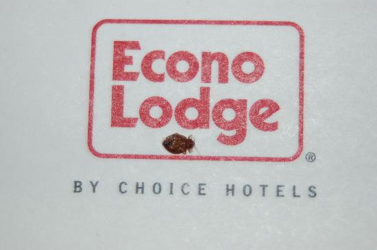 Anaheim Discovery Inn & Suites at the Park : Bedbugs at the Econo Lodge