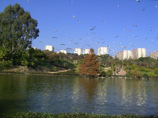 مالقة, إسبانيا: Torremolinos.Parque de la paloma