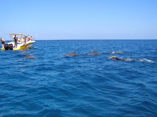 Nager avec les dauphins foto di tarisa resort spa for Nager avec les dauphins nice