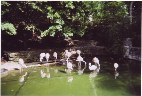 John Ball Zoo: Flamingoes