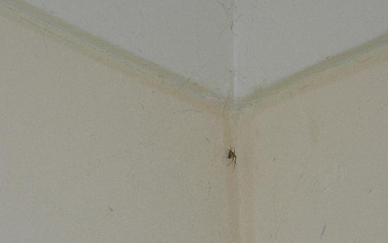 The Grosvenor: An eight-legged friend in the bedroom