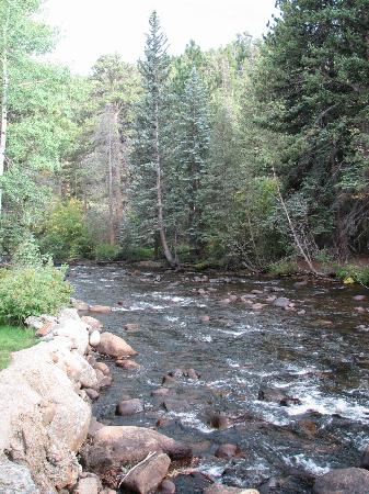 River Spruce: The Big Thompson River runs thru it!