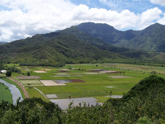 Sealodge at Princeville: Kauai's taro fields