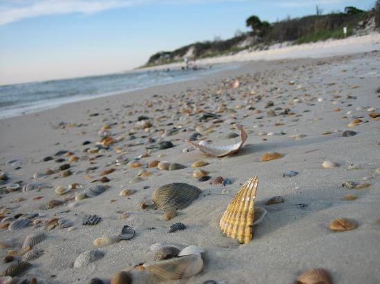 Port Saint Joe, Floride : Shells on relatively deserted St Joseph Peninsula Beach