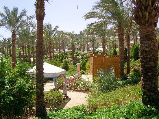 Four Seasons Resort Sharm El Sheikh: lush landscaping