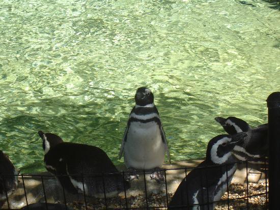 Des Moines, IA: Penguins - Blank Park Zoo