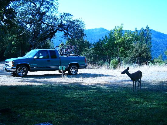 Hyampom, CA: Morning Visitors