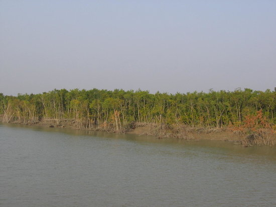 West Bengal, India: Sunderbans Forest Bangladesh