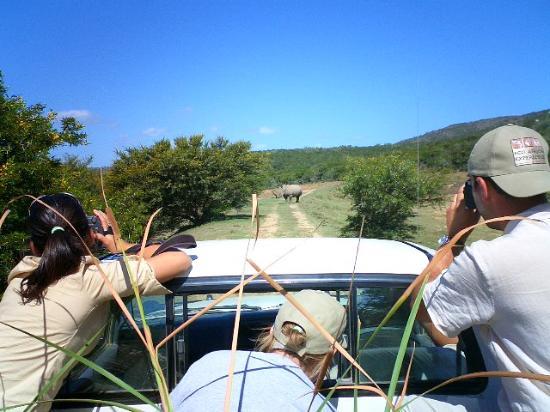 Shamwari Game Reserve Lodges: Safari
