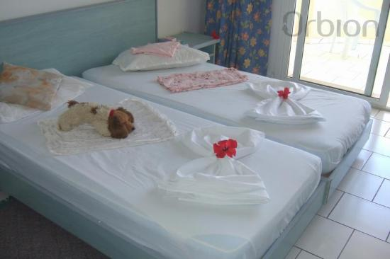 Hotel Safa : and our beds