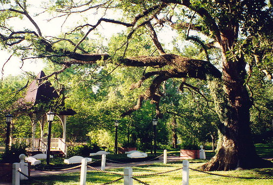 Evangeline Oak, Saint Martinville, Louisiana, United States