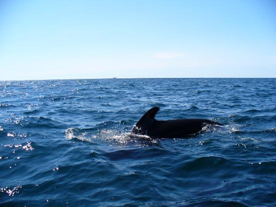 Ocean Haven Bed & Breakfast : pilot whales  at Pleasant Bay