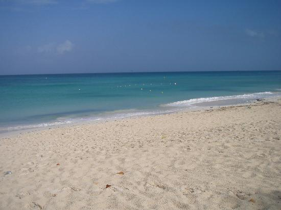 AM Eagle Beach - Picture of Amsterdam Manor Beach Resort, Palm - Eagle ...