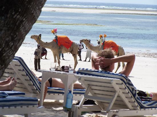 Leopard Beach Resort & Spa: private sunbathing next to the beach