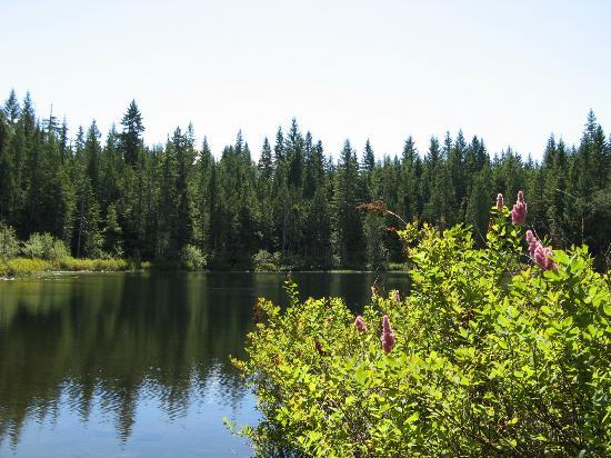 Alice Lake Provincial Park: Alice Lake Scenery