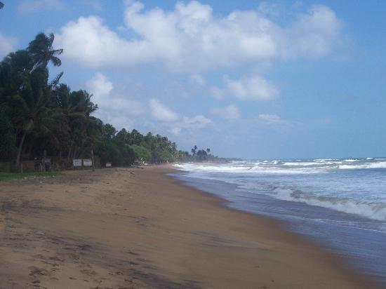Hotel Hibiscus Beach: Hibiscus beach