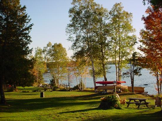 Birch Point Cabins : Beauty everywhere!