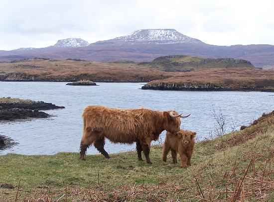 Isla de Skye, UK: MacLeod's Tables and Loch Dunvegan