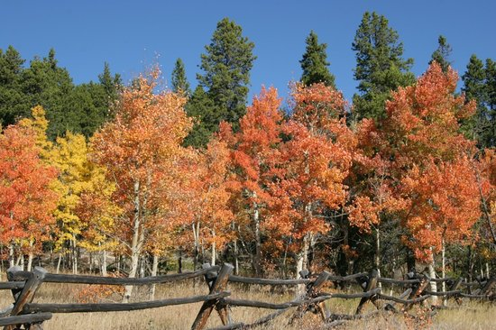Peak to Peak Scenic Byway: Aspen near Gilpin County