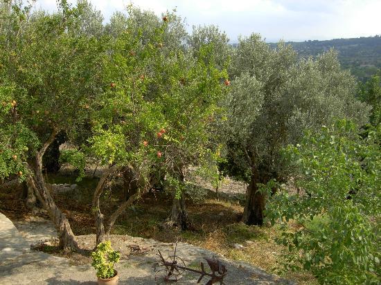 Finca Es Castell: Pomegranate Trees