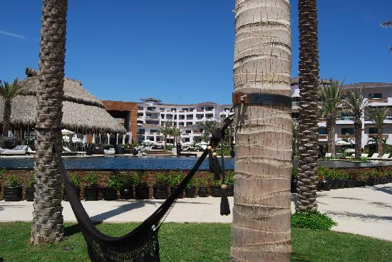 Cabo Azul Resort : pool-side hammock