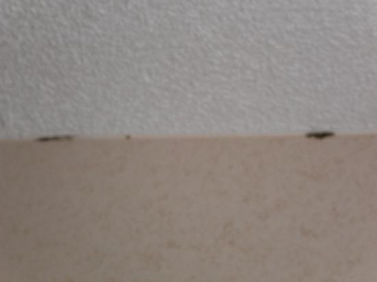 Superior What Causes Mold On Ceiling In Bedroom Hbm Blog