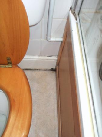 Avon Guest House: The mouldy corners of the floor