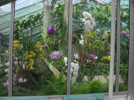 orchidées - Photo de Jardin des Serres d\'Auteuil, Paris ...
