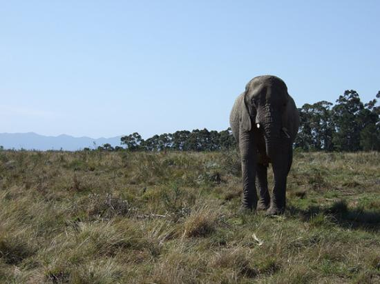 African Breeze Guesthouse Leisure Isle Knysna: Knysna Elephant Park