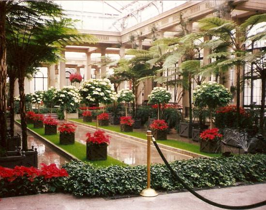 Greenhouse With Poinsettias At Longwood Gardens Picture
