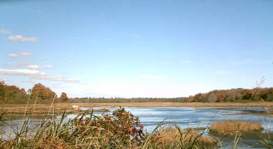 Wells Reserve at Laudholm: Salt Marsh in Autumn