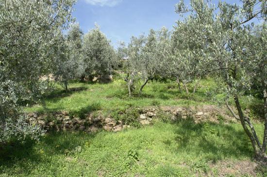 La Baghera: The kitchen garden
