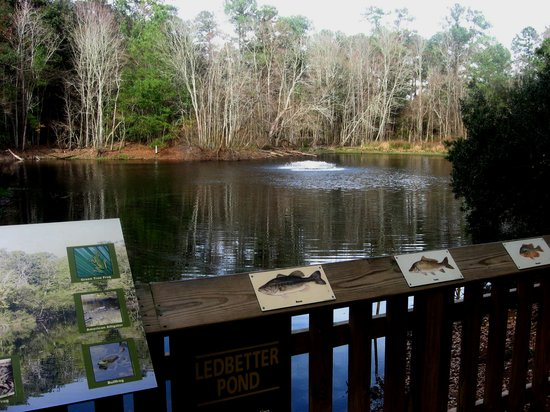 Oatland Island Wildlife Center: the pond