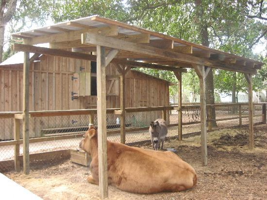 Oatland Island Wildlife Center: barnyard