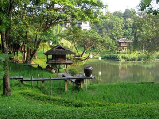 Lana Thai Villa: Rice Paddy on the grounds of 4 Seasons