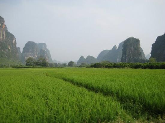 Yangshuo Mountain Retreat: Rice fields upstream from the hotel